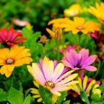 Flowers thriving